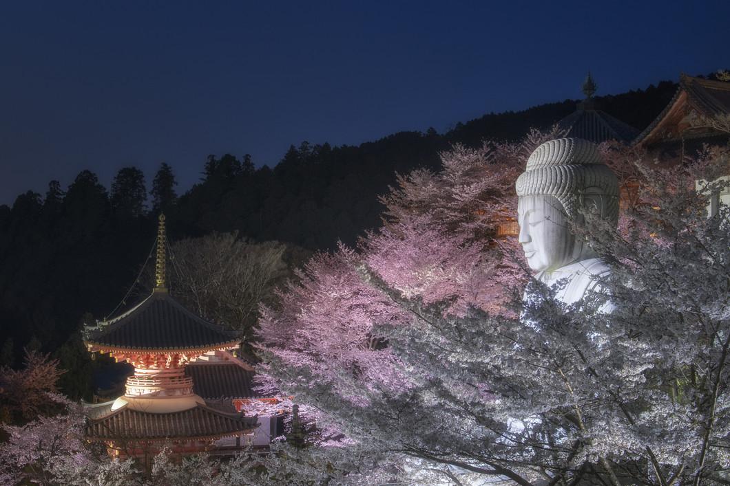 壷阪寺夜桜ライトアップ(2020)