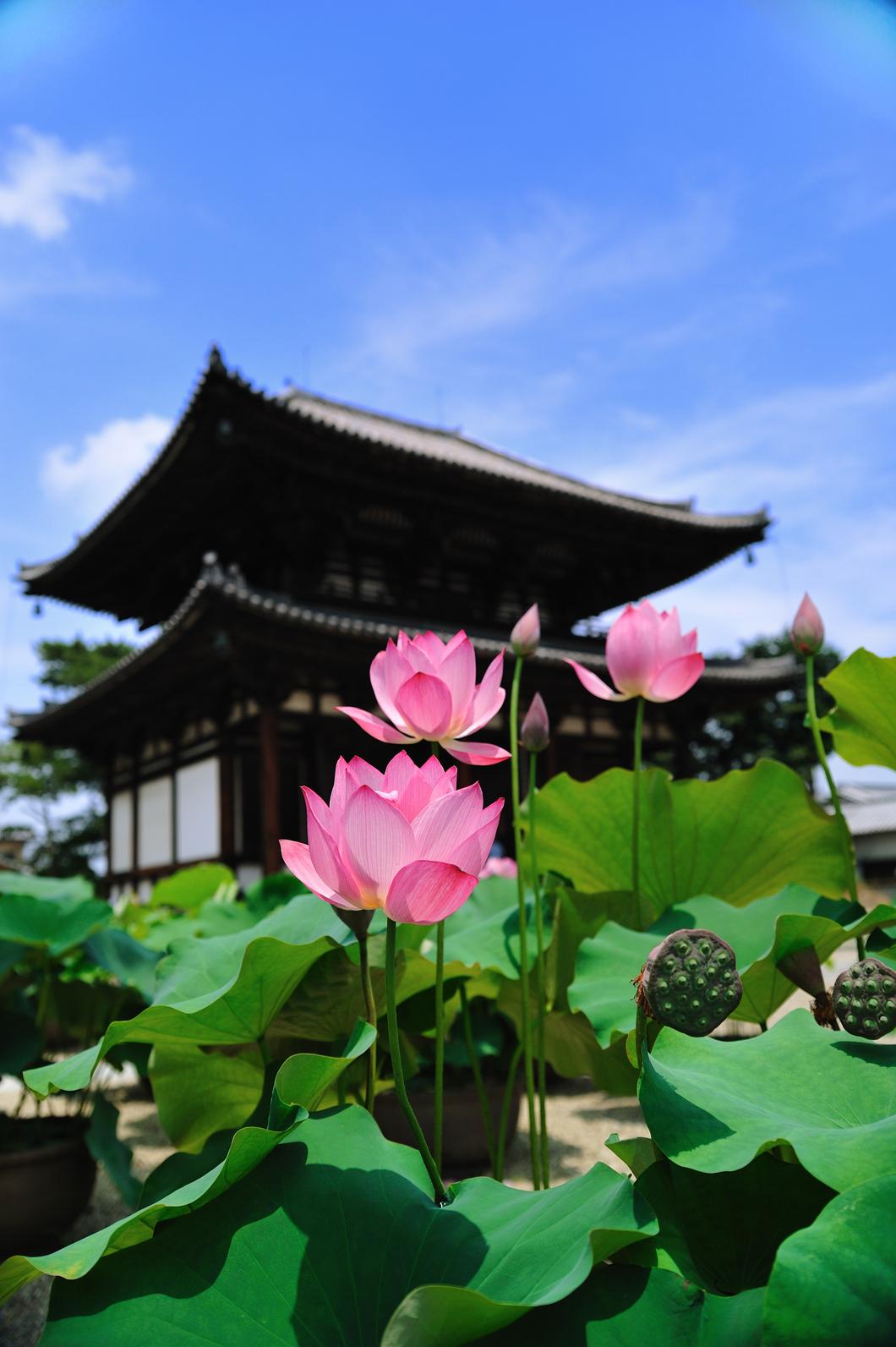 奈良・西ノ京ロータスロード~蓮とご朱印めぐりを楽しむ旅~