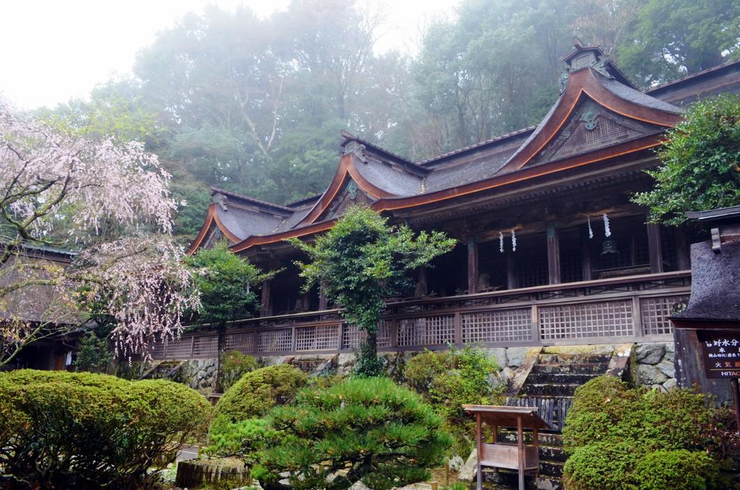 吉野水分神社のシダレ桜