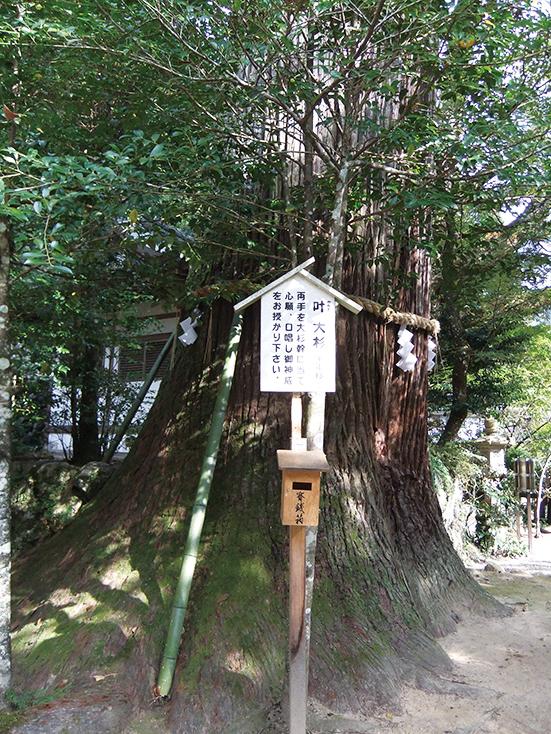 叶えの大杉(千年杉)