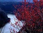 県立月ヶ瀬・神野山自然公園