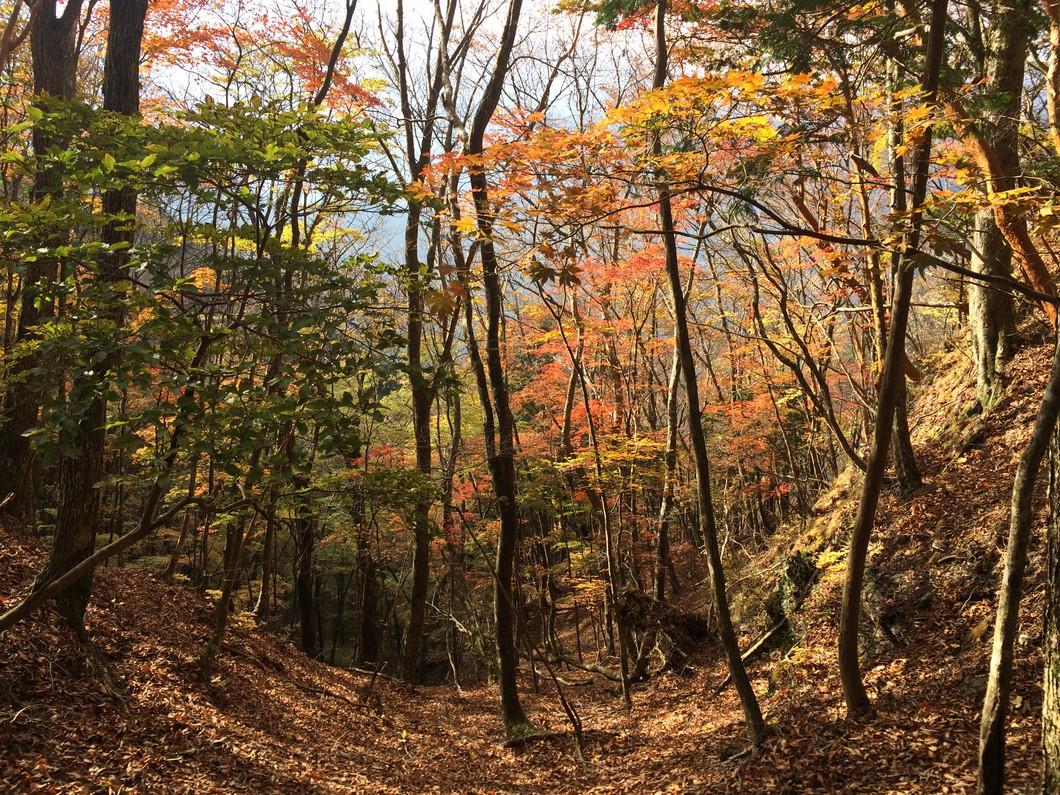 初秋の登山道