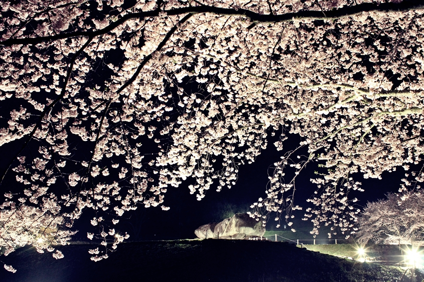 石舞台古墳夜桜ライトアップ