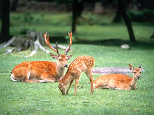 奈良公園|奈良県観光[公式サイ...