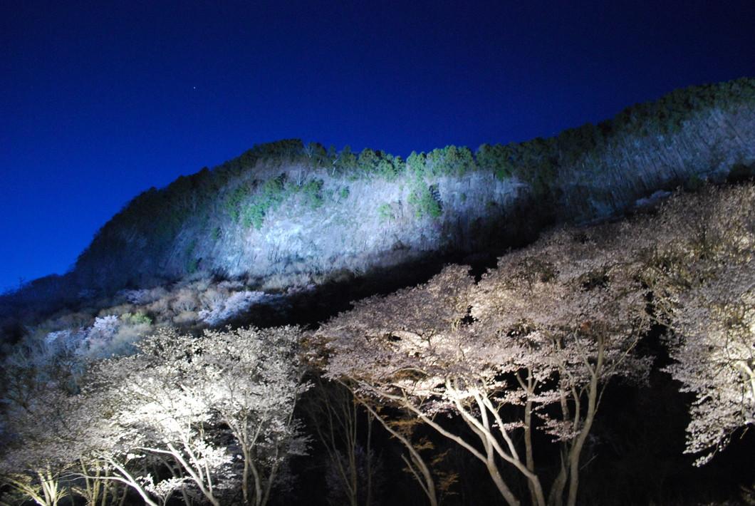 屏風岩公苑 山桜ライトアップ