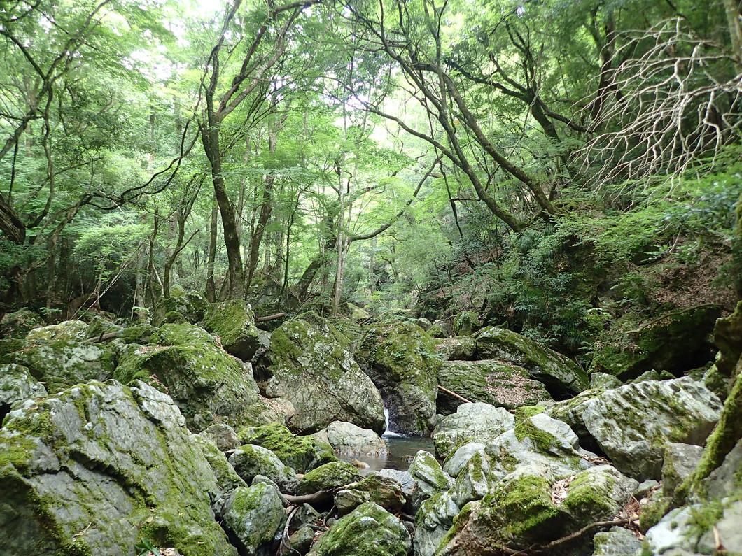 三之公天然林