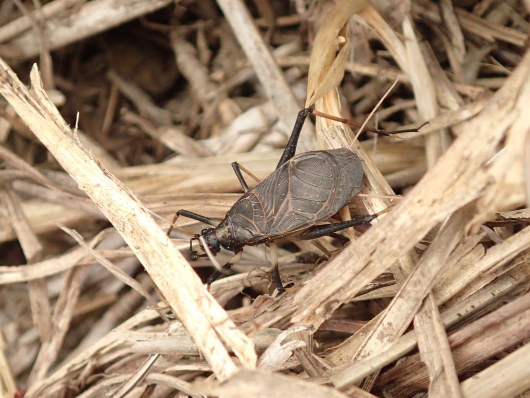 白屋の昆虫と生態