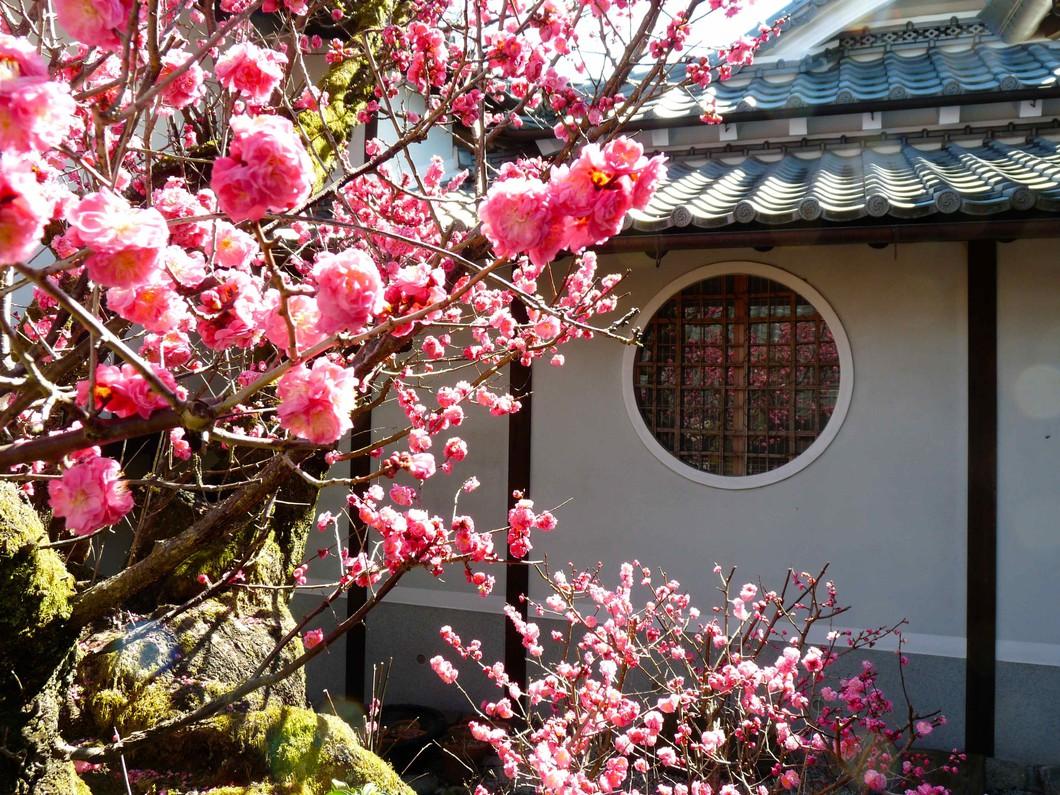 梅の季節が特に美しいです。3月上旬〜下旬。