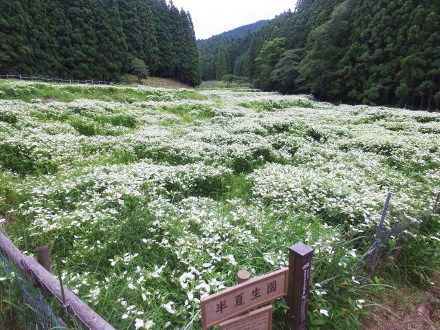 岡田の谷の半夏生園 特産品販売