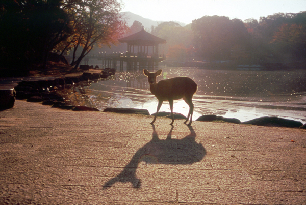 ことばが彩る晩秋の奈良~文士たちの息吹を求めて~