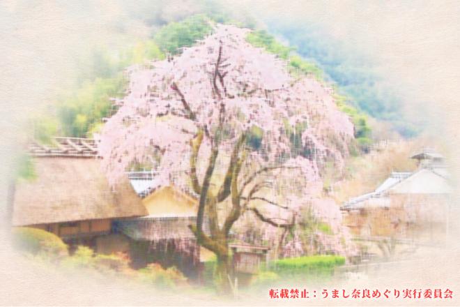 奥大和に咲いた維新の櫻 「志に散った天忠組」こころで感じるツアー