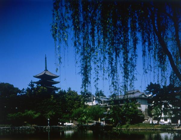 短歌で楽しむ秋の奈良~會津八一の歌碑を求めて~