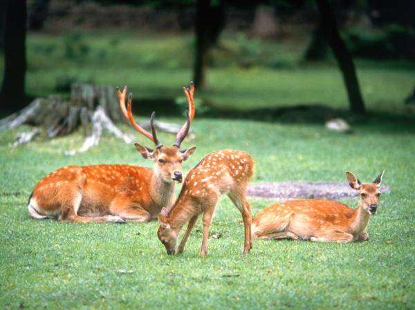 奈良県観光局 中西理事が語る!奈良公園の奥深い魅力に感動 周辺まち歩きと「社寺の都」体感 2日間