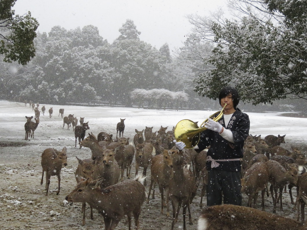冬の鹿寄せ