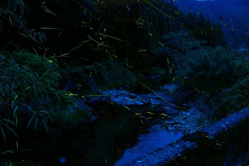 第15回御杖村蛍観賞会