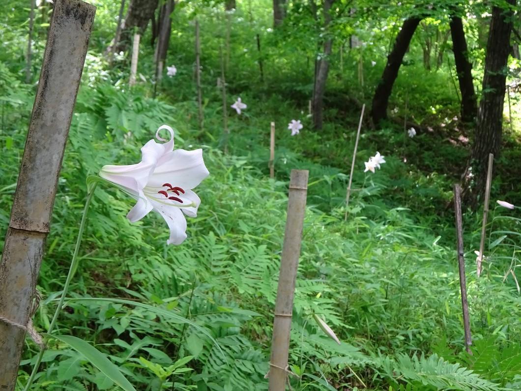 里山自然教室「ササユリの香る丘見学ツアー」