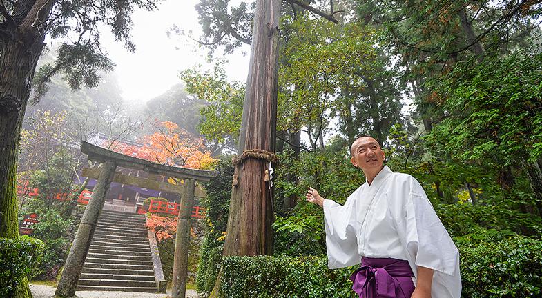 —高鴨神社は絶滅を危惧されるニホンサクラソウのほとんどの品種、約500種を保護され、春には2,000株以上の花が咲き、参拝者の心を和ませています。