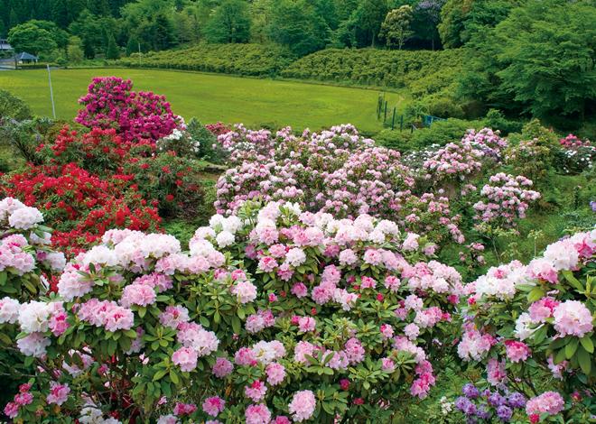 なら 華麗 に 咲く 花 花咲く華麗な街で