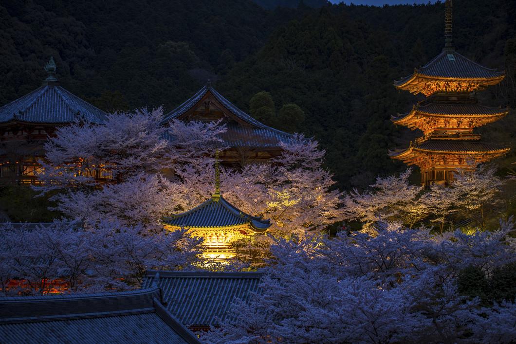壷阪寺夜桜ライトアップ(2019)