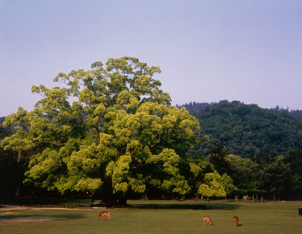 奈良県観光[公式サイト] あをによし なら旅ネット