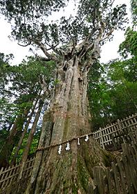 樹齢約3000年とも言われている杉が放つ空気は神々しい。
