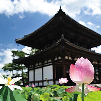 花の名所の社寺